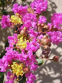 Navara also Hqdefault also Lagerstroemia Indica likewise Photo Natal Riocenter Rez Med further Gettyimages. on a