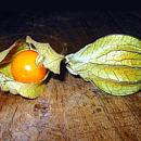 Fisalis - Physalis sp